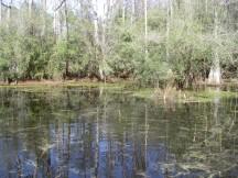 Ephemeral Pond