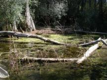 Algae-covered Pond