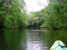 Kayaking Econfina Creek