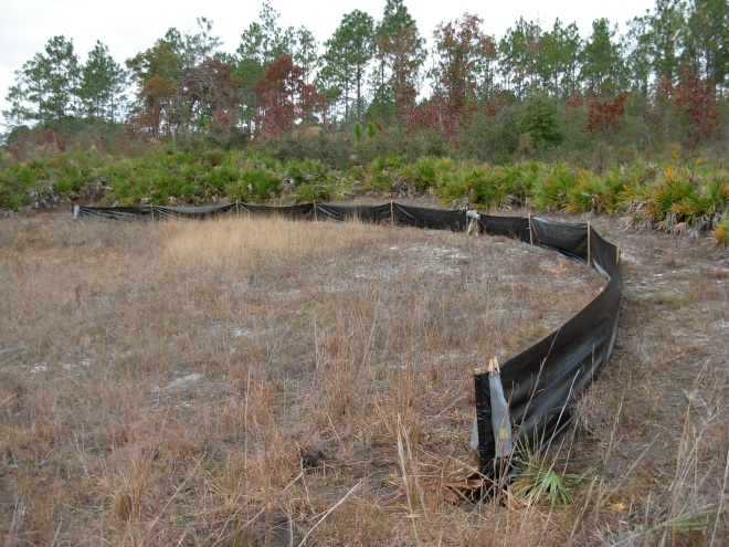 Drift fence, partially encircling a pond.